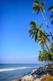 Palmen auf einem Hintergrund des blauen Himmels Lizenzfreies Stockfoto