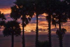 Palmen auf einem Hintergrund des blauen Himmels Stockfoto
