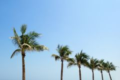 Palmen auf einem Hintergrund eines blauen Himmels Stockbilder