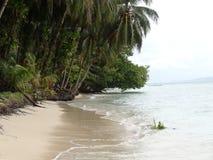 Palmen auf einem schönen Strand mit Türkis wässern lizenzfreie stockbilder