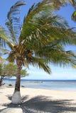 Palmen auf einem Strand