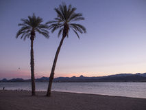 Palmen auf einem Strand Lizenzfreies Stockfoto