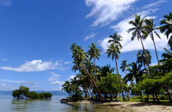 Palmen auf einem Strand, Insel Vanua Levu, Fidschi Stockfoto