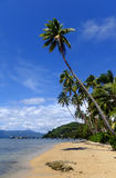 Palmen auf einem Strand, Insel Vanua Levu, Fidschi Stockfotos