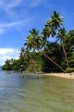 Palmen auf einem Strand, Insel Vanua Levu, Fidschi Lizenzfreie Stockbilder