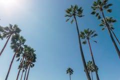 Palmen auf einem Venedig setzen in Kalifornien auf den Strand Stockbild