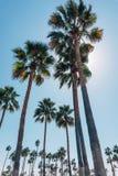Palmen auf einem Venedig setzen in Kalifornien auf den Strand Lizenzfreie Stockbilder