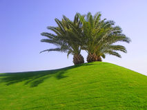 Palmen auf grünem Gras Stockfoto