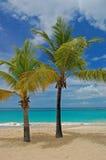 Palmen auf großartigem Anse setzen auf Grenada-Insel auf den Strand Lizenzfreie Stockbilder