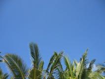 Palmen auf Horizont Stockfoto