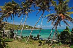 Palmen auf Industrie-Schacht setzen auf Bequia auf den Strand Stockfotos