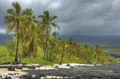 Palmen auf Küstenlinie. Stockbild