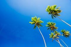 Palmen auf klarem blauem Sommerhimmel Lizenzfreie Stockfotografie