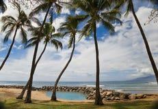 Palmen auf Lagune Stockfotos