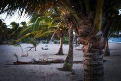 Palmen auf Strand Stockfotos