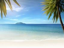 Palmen auf Strand lizenzfreies stockfoto
