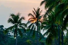 Palmen auf Strand, digitales Fotobild als Hintergrund lizenzfreie stockbilder