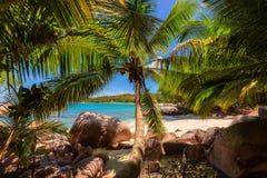 Palmen auf tropischem Anse Lazio setzen, Seychellen auf den Strand stockfoto