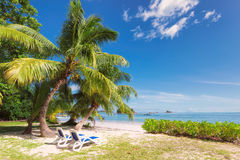 Palmen auf tropischem leerem Strand mit Strandstühlen Stockfoto