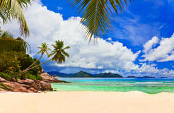 Palmen auf tropischem Strand Stockfoto