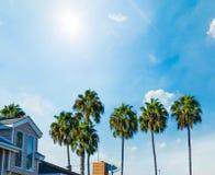 Palmen in Balboaeiland onder een blauwe hemel stock afbeelding