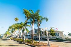 Palmen in Balboaeiland onder een glanzende zon stock foto's