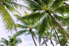 Palmen in Bali Royalty-vrije Stock Foto's