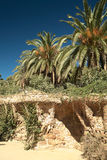 Palmen in Barcelona Stock Afbeelding