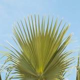 Palmen-Baumast Tropische Baumfotonahaufnahme lizenzfreies stockfoto