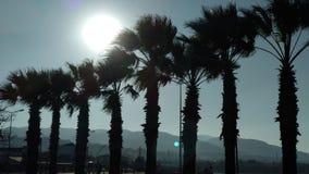 Palmen bei dem Sonnenuntergang Lizenzfreie Stockbilder