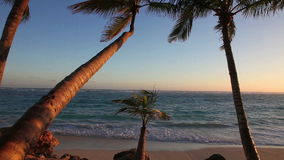 Palmen bei Sonnenaufgang