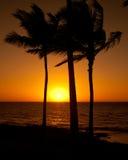 Palmen bei Sonnenuntergang Lizenzfreie Stockfotos