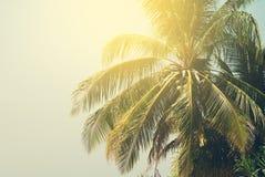 Palmen beleuchteten bis zum dem Sun auf tropischem Strand Getonter Hintergrund Lizenzfreies Stockfoto