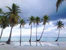 Palmen bij Caraïbisch strand dichtbij overzees stock foto