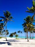Palmen bij Caraïbisch strand dichtbij overzees stock fotografie