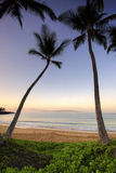 Palmen bij dageraad op Ulua-Strand, Maui, Hawaï Royalty-vrije Stock Foto's