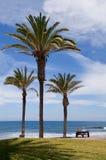 Palmen bij de kust de Atlantische Oceaan Stock Afbeeldingen