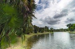 Palmen bij de oever van het meer Stock Foto