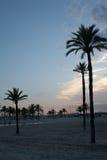 Palmen bij de zonsondergang Stock Foto