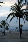 Palmen bij de zonsondergang Stock Fotografie
