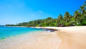 Palmen bij een tropisch strand Stock Foto's