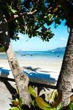 Palmen bij het mooie Strand van landschapspatong o royalty-vrije stock afbeelding