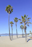 Palmen bij het Strand Stock Foto