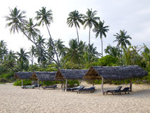 Palmen bij het strand Stock Fotografie
