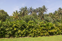Palmen bij het Strand Stock Afbeeldingen