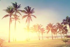 Palmen bij het strand Royalty-vrije Stock Fotografie