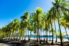 Palmen bij het Strand Royalty-vrije Stock Afbeelding