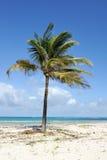 Palmen bij het strand Royalty-vrije Stock Afbeeldingen