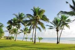 Palmen bij het strand Stock Afbeelding