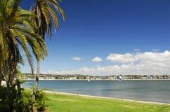 Palmen bij het strand in San Diego Stock Foto's
